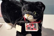 Sony разрабатывает гаджет для кошек блогеров