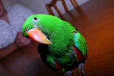 Попугай предотвратил ограбление дома своего хозяина