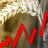 Зерно дорожает. Миру грозит продовольственный кризис?