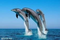 За что дельфинам дают ордена