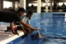 """""""История дельфина"""" выбилась в лидеры проката"""