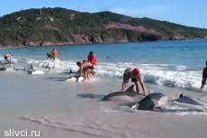 Туристы спасли дельфинов от смерти
