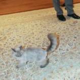 От Дмитрия Медведева сбежал кот