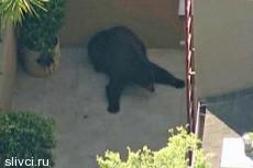 Американец столкнулся на улице с медведем