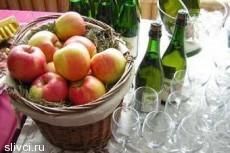 В России чиновники не считают сидр и медовуху алкоголем