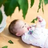 Растения для детской: прекрасные и опасные