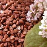 Плохой урожай грозит повышением розничных цен на гречку