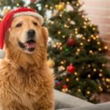 Новогодние приметы в год Желтой Собаки